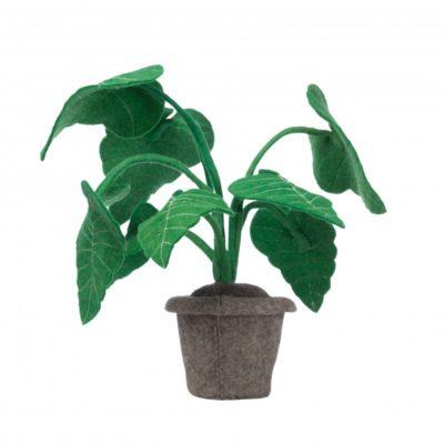 KIDSDEPOT Plant - Alocasia